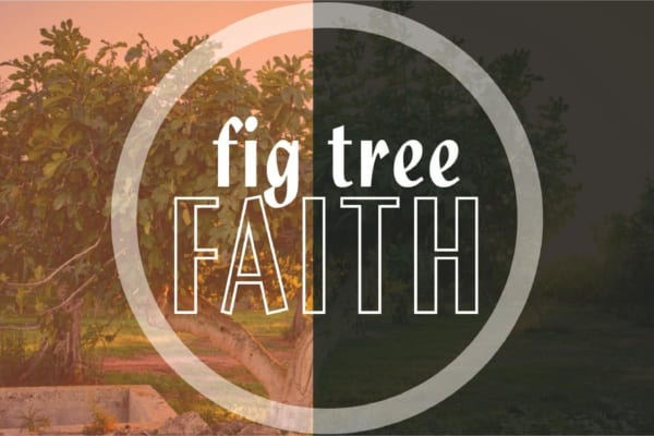 Fig Tree Faith sermon logo - fig tree in back ground